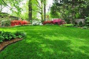 lush_lawn